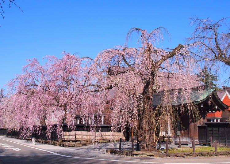 2.武家屋敷通り(秋田県仙北市) 利用列車:秋田新幹線こまち(秋田駅)