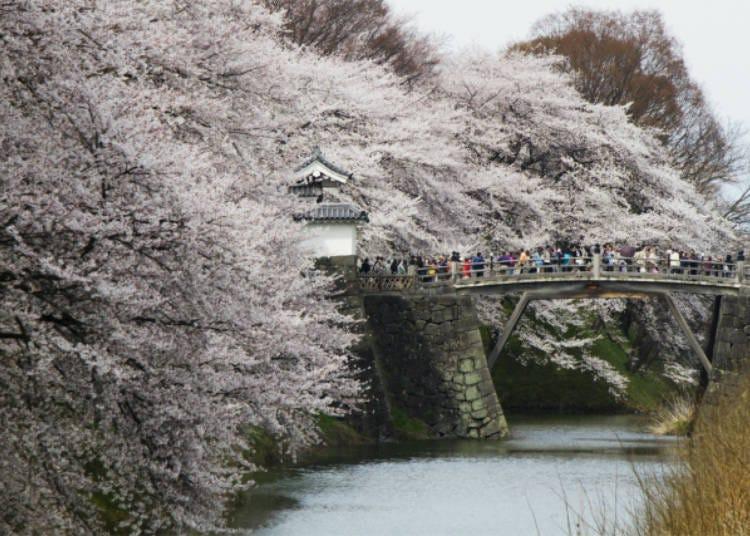 4)霞城観桜会(山形県)