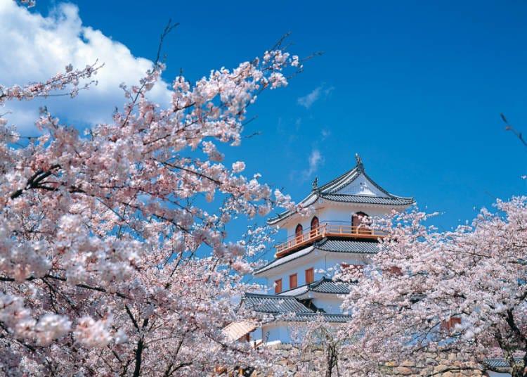 2) 【2021년 개최중지】 시라이시조(성) 벚꽃축제(미야기현)