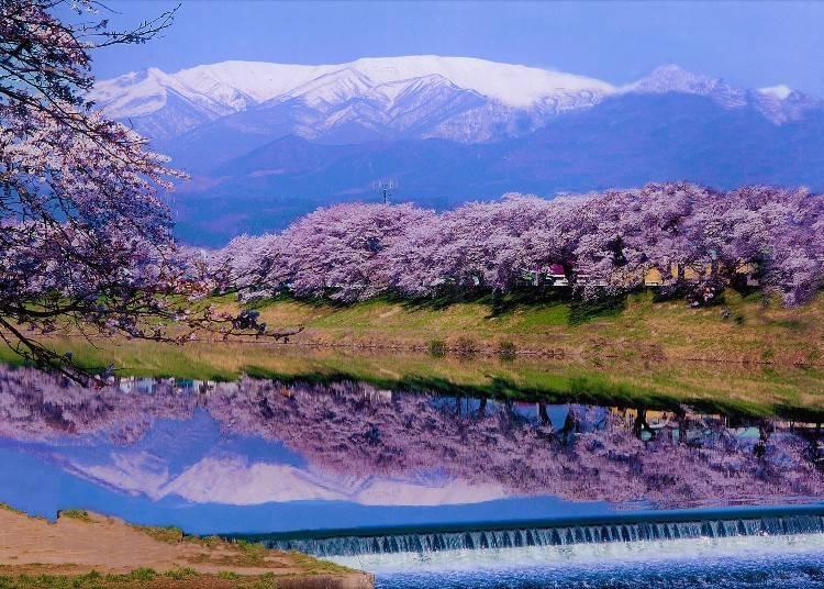 3)【2021년 개최 중지】 오오가와라 벚꽃 축제(미야기현)
