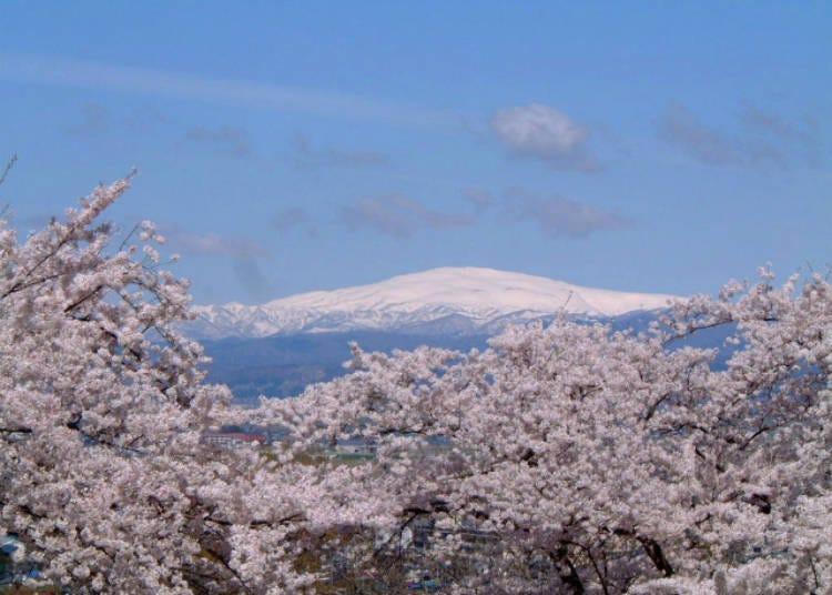 5)【2021년 인간장기는 중지】덴도 벚꽃 축제 인간장기(야마가타현)