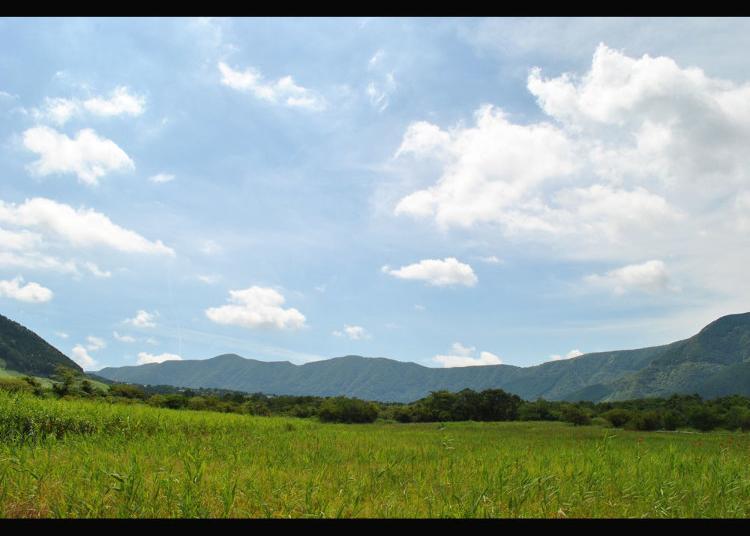 第2名:箱根湿生花园