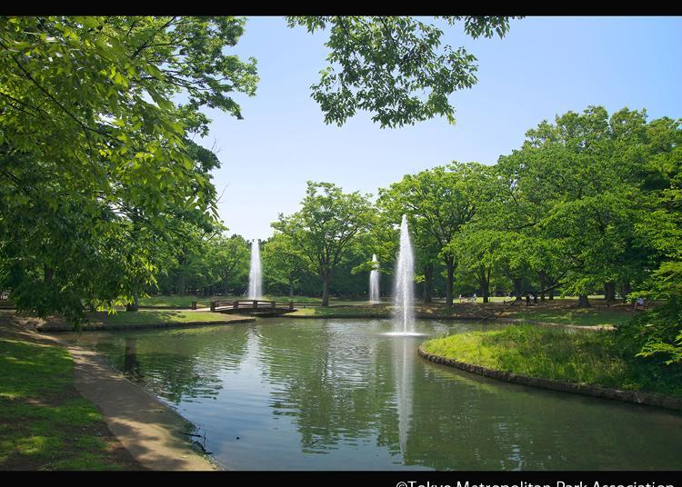 2위. 요요기 공원
