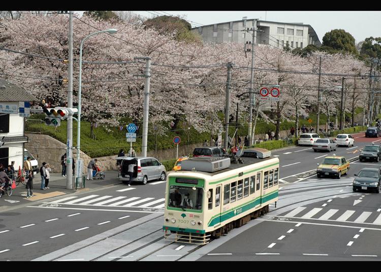 9위. 아스카야마 공원
