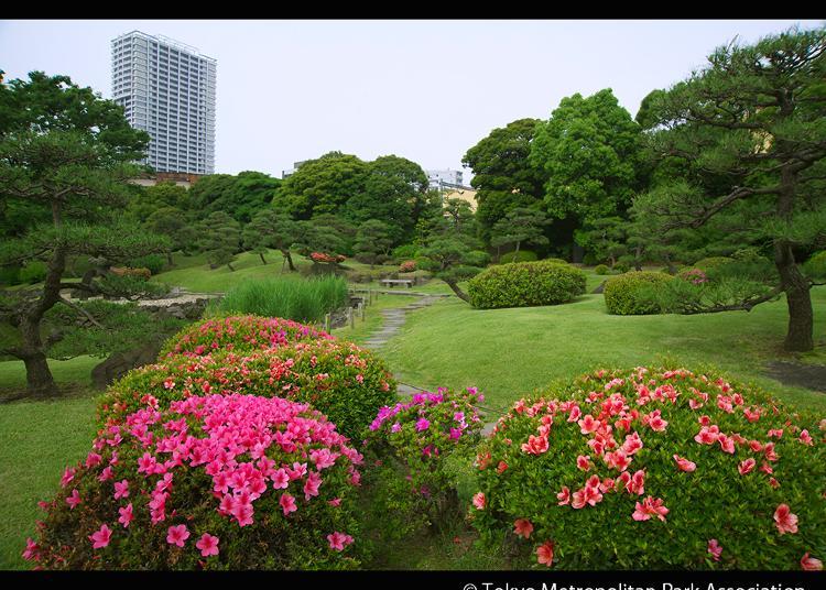 7.Kyu Shiba Rikyu Garden