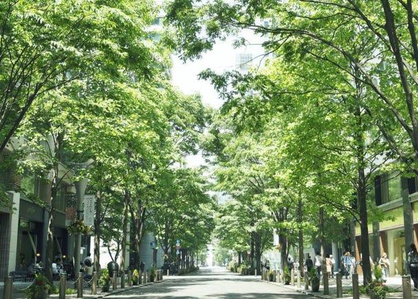 6위. 마루노우치 중앙 거리