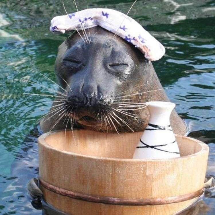 Tokyo Trip: Most Popular Zoos, Aquariums & Botanical Gardens in Tokyo and Surroundings (August 2019 Ranking)