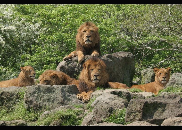 4.Fuji Safari Park