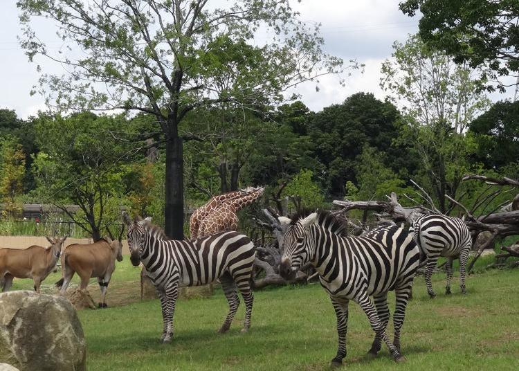 9위. 요코하마 동물원 주라시아
