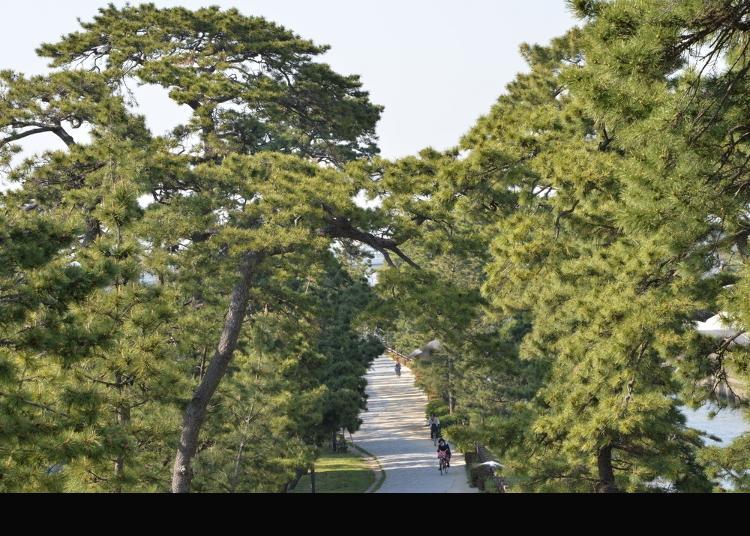 5.Soka Matsubara (Big Bonsai Road)