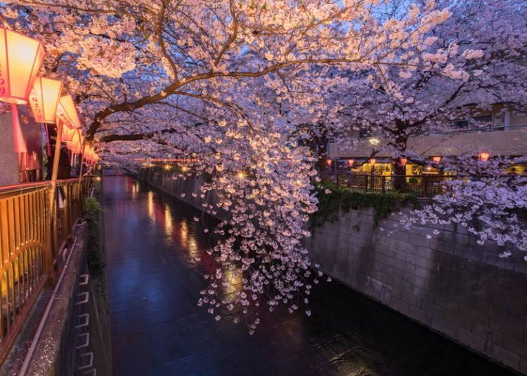 10.Meguro River