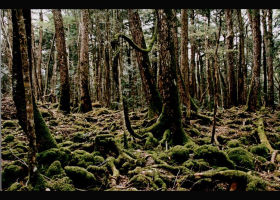 Japan Trip: Most Popular Forests & Mountains in Tokyo and Surroundings (September 2019 Ranking)