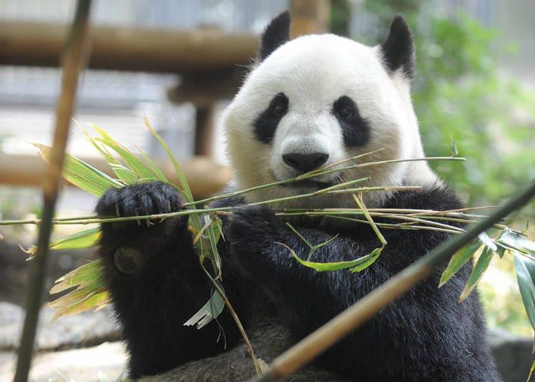 【第10位】恩賜上野動物園
