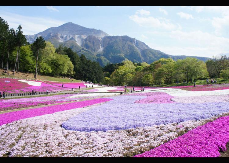 7.Hitsujiyama Park