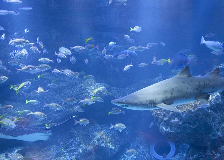 4.Sumida Aquarium