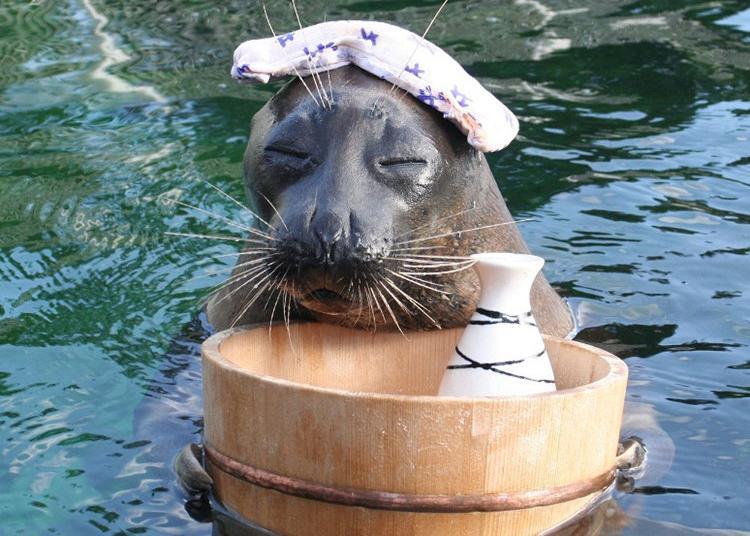 7.Hakone-en Aquarium