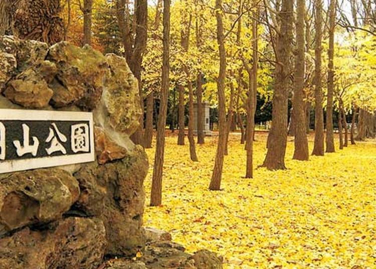 4위. 마루야마공원