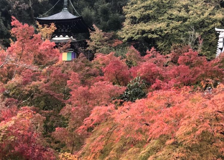 8.Zenrin-ji Temple (Eikan-do)