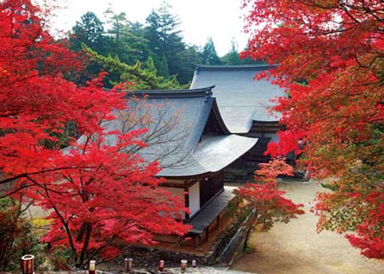 1.Jingo-ji Temple