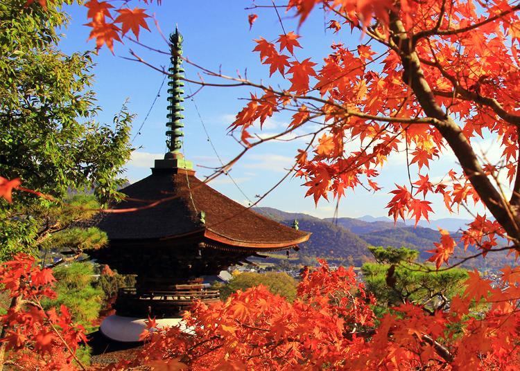 6.Jojakko-ji Temple