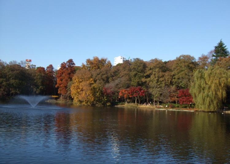 7.Inokashira Park
