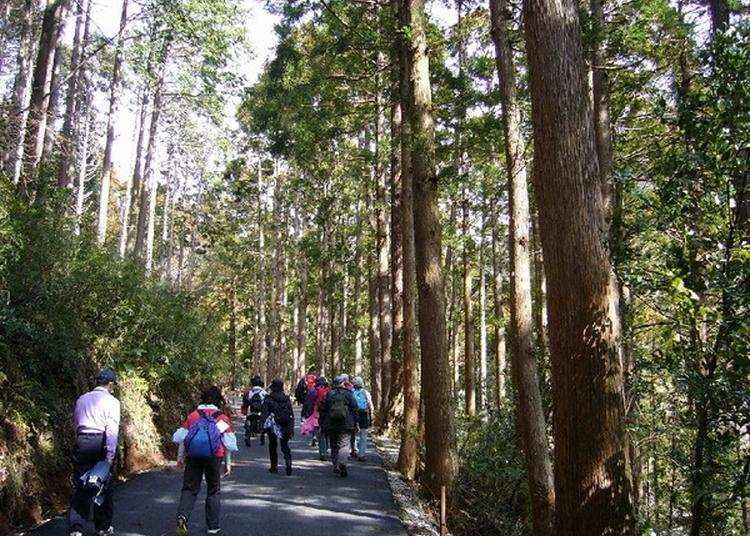 Awesome Things to Do In Japan: 5 Most Popular Hiking Courses in Tokyo and Surroundings! (December 2019 Ranking)