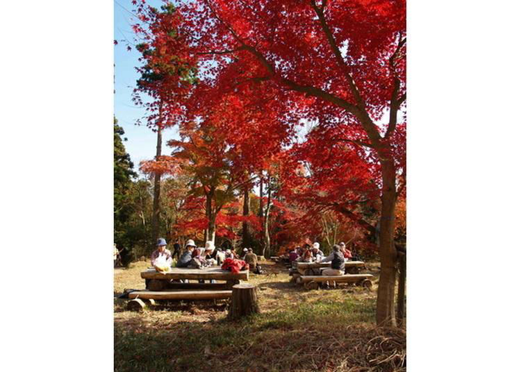 5.Amaterasu and Momiji no Sato Hiking Course