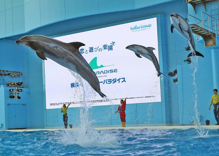 第8名:Yokohama Hakkeijima Sea Paradise