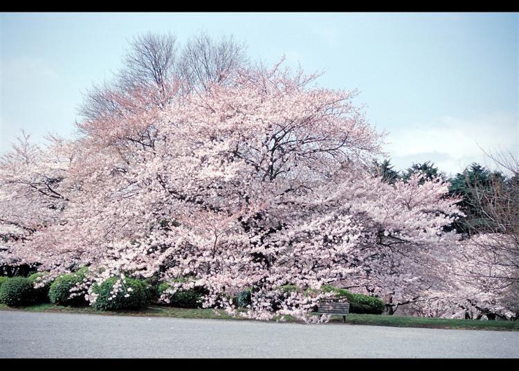 第1名:新宿御苑