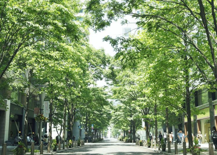 7.Marunouchi Naka-Dori Street