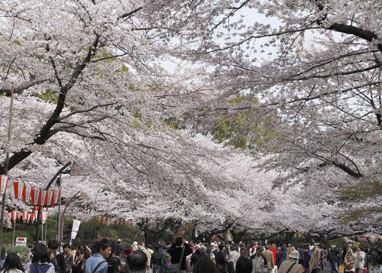 第4名:上野恩賜公園