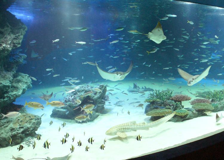 第5名:阳光水族馆
