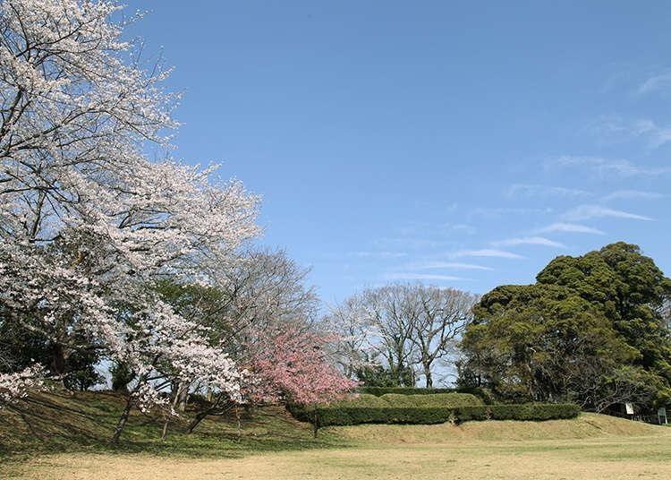 9위. Sakura Castle Park