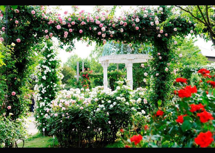 6.Keisei Rose Garden