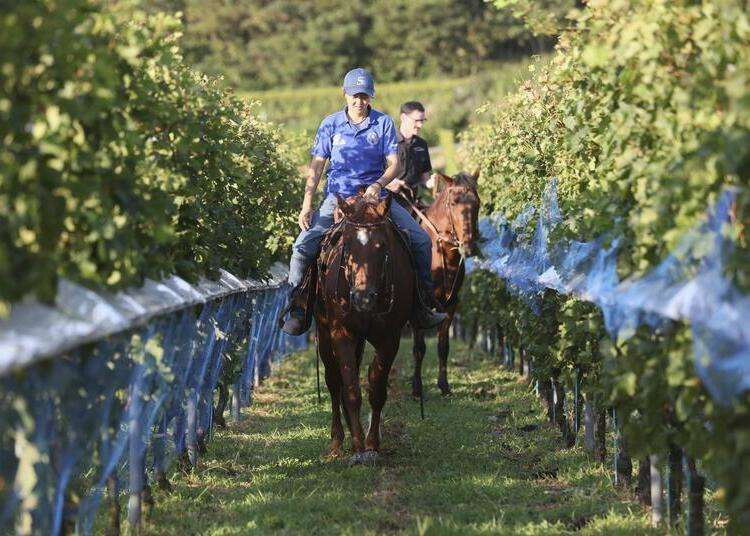 Winery tour and equine adventure in Shizuoka