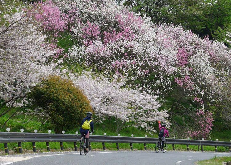 Cycle around the stunning Seto Inland Sea; enjoy hands-on activities on a farm