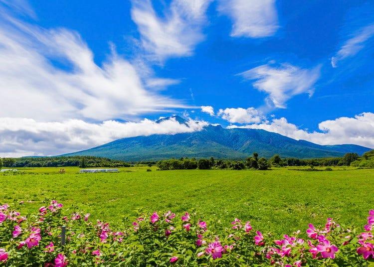 โมริโอกะ/ฮิราอิซูมิ/ฮาจิมันไตของภาพรวมและประวัติศาสตร์