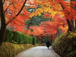 Morioka, Hiraizumi And Hachimantai:Area Introduction