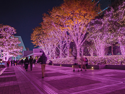 Mid-November to late February: Shinjuku Terrace City Illuminations