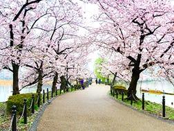 Sekitar Kawasan Ueno Onshi Koen