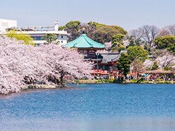 Late March to early April: Ueno Cherry Blossom Festival