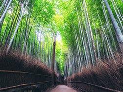 Arashiyama Surrounding Areas
