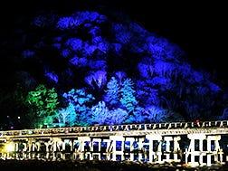 12월 중순: 교토 아라시야마 꽃등길