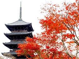 To-ji Temple Surrounding Areas