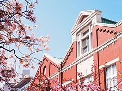 4월 중순: 벚꽃길