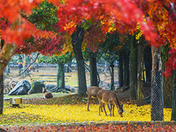 Central Nara Surrounding Areas