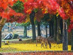 奈良市中心区域