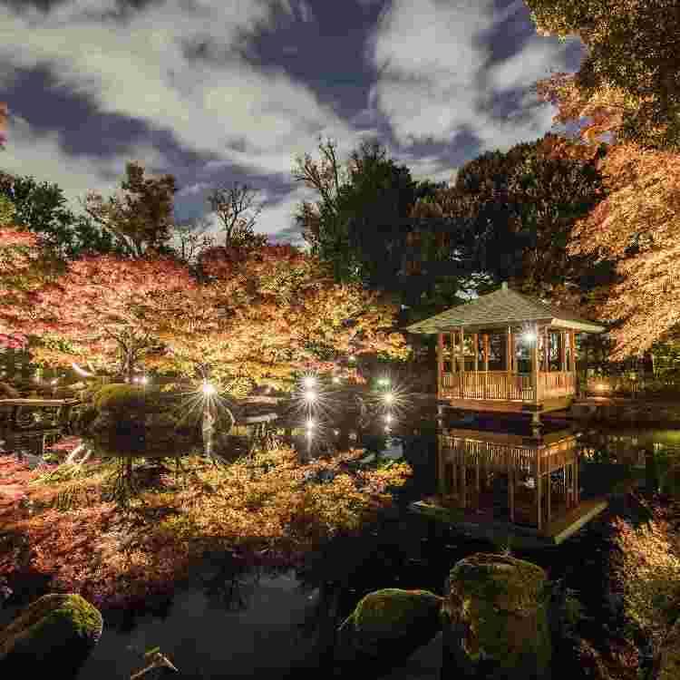Event Introduction: Otaguro Park Fall Foliage Illumination