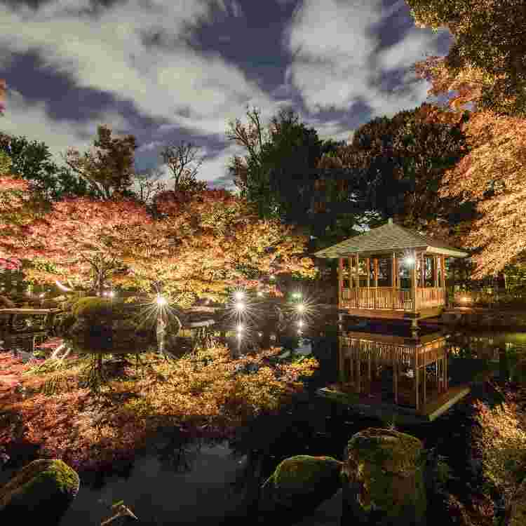 Event Introduction: Otaguro Park Fall Foliage Illumination