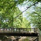 "Unique Destination: ""Zenpukuji River Green Space"" in Ogikubo and Minami-Asagaya"